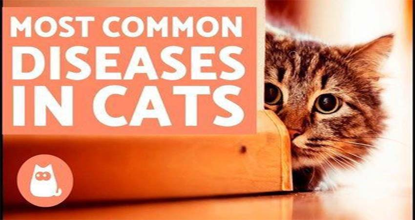 Common Diseases and Their Medicines